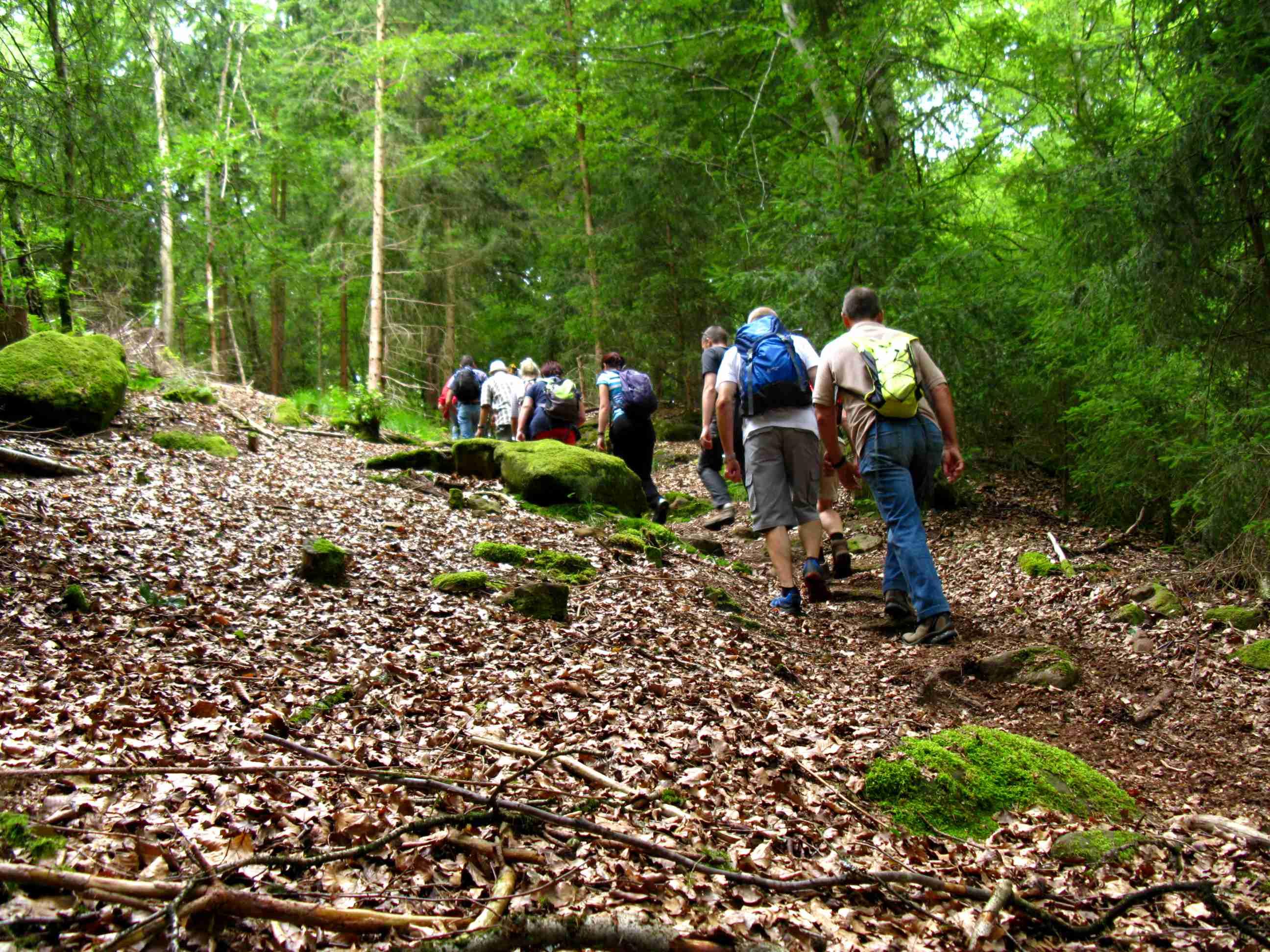 2015-07-26 Grenzüberschreitende Single-Wanderung in der Pfalz