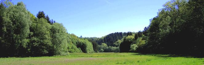 landschaft wiese wald